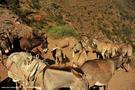 13-el-sod-borana-salt-cratrer-vulcano-ethiopia